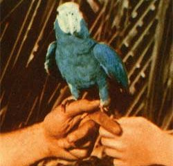 Andrew Bird <i>Are You Serious</i> 5